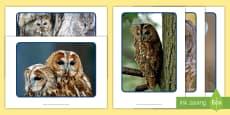 Owl Display Photos