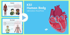 KS1 Human Body Information PowerPoint
