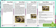 Year 2 Javan Rhinos Differentiated Fact File