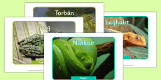 Irish Reptiles and Amphibians Display Photos Gaeilge