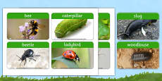 Minibeast Photo Word Cards