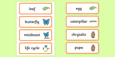 Life Cycle of a Butterfly Word Cards
