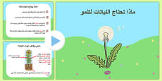 What Plants Need to Grow PowerPoint Arabic