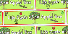 Apple Tree Life Cycle Display Banner
