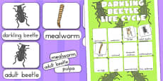 Australia - Darkling Beetle Life Cycle Vocabulary Poster