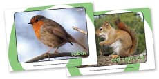 British Wildlife Display Photos