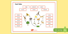 Food Webs Word Mat