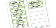 Rainforest Key Words