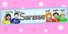 Australia - Five Senses Display Banner
