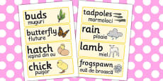 Spring Word Cards Romanian Translation
