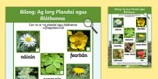 Plants and Flowers Hunt Sheet Gaeilge