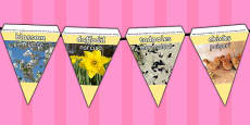 Spring Display Photo Bunting Romanian Translation