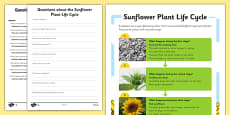 Sunflower Plant Life Cycle Differentiated Reading Comprehension Activity