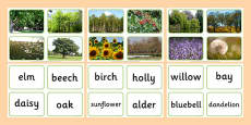 Nature Tree Photo Matching Cards