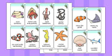 Under the Sea Flashcards Polish Translation