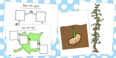 Australia - Bean Life Cycle Activity Sheets