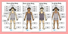 Parts of the Body A4 Arabic Translation