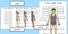 Body Parts Labelling Activity Te Reo Māori