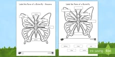 * NEW * Label the Parts of the Butterfly Activity Sheet