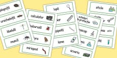 Minibeasts Investigation Play Research Lab Word Cards Romanian
