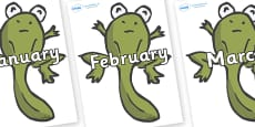 Months of the Year on Froglets