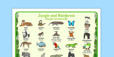 Jungle and Rainforest Word Mat Polish Translation