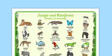 Jungle and Rainforest Word Mat Polish Translation