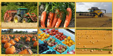 Harvest Photo Clip Art Pack