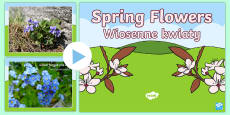 * NEW * Spring Flowers PowerPoint English/Polish