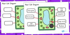 Plant Cell Diagram (Australia)