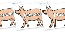 Months of the Year on Pigs to Support Teaching on Pig in the Pond