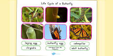 Australia - Life Cycle of a Butterfly Photo Cut Out Pack