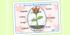 Parts of a Plant Word Mat French