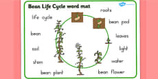 Bean Growth Word Mat (Australia)