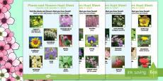 Plants and Flowers Hunt Activity Sheet English/Italian