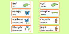 Life Cycle of a Butterfly Word Cards Polish Translation