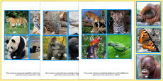 Jungle Animals and their Young Picture Matching Cards