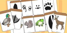 Animal Footprint Matching Activity
