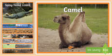 Arabian Animals Display Photos