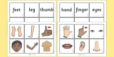 Parts Of The Body Word and Picture Matching Cards