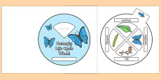 Butterfly Life Cycle Spin Wheel