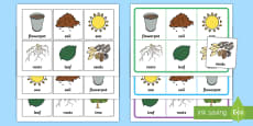 * NEW * Plants and Growth Bingo and Lotto Game