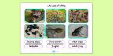 Life Cycle of a Frog Photo Cut Out Pack