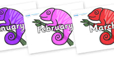 Months of the Year on Chameleons
