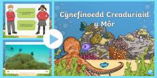 Pŵerbwynt Cynefinoedd Creaduriaid y Môr
