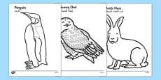 Arctic Animals Colouring Images Arabic Translation