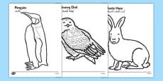Arctic Animals Colouring Images Arabic Translation