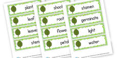 Plant Word Cards