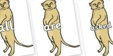 Tricky Words on Meerkats