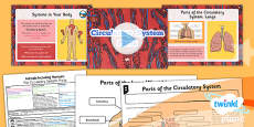 PlanIt - Science Year 6 - Animals Including Humans Lesson 1: The Circulatory System Parts Lesson Pack
